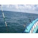 Canas de pesca embarcada